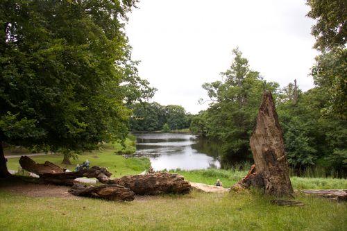 skovlysning tree trunks lakeshore