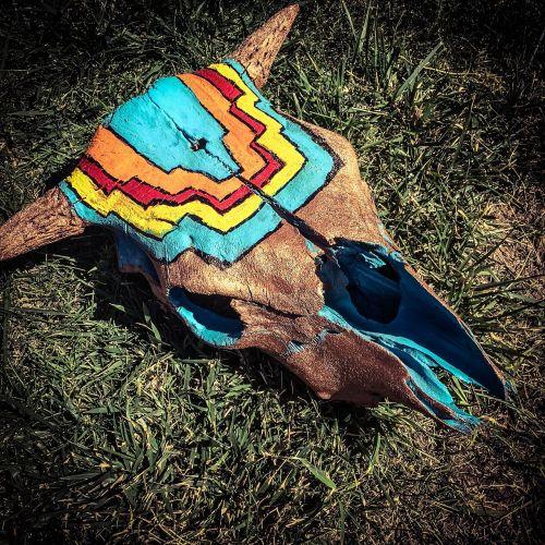 skull painted colorado