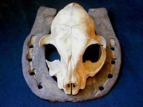 skull animal skull cat skull