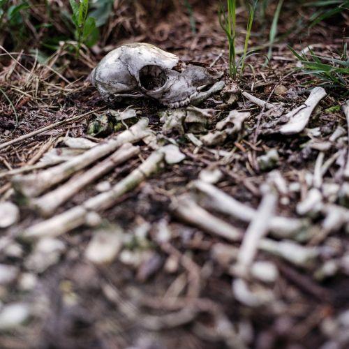 skull pile of bones bones