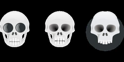 skull bones human