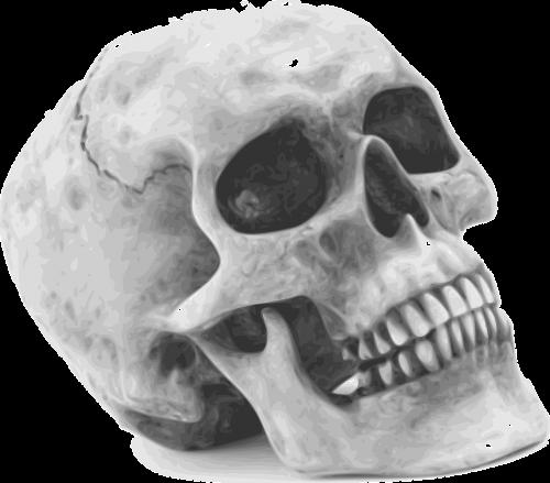 skull skeleton human