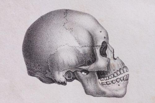skull skull and crossbones human