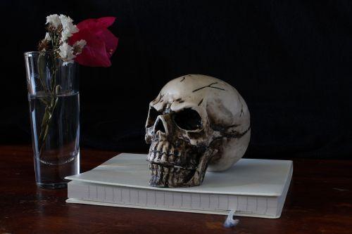 skull still life representation