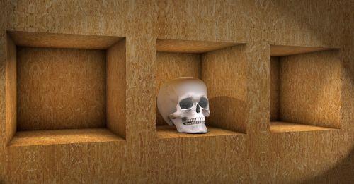 skull shelf wood