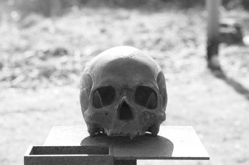 skull head skull and crossbones