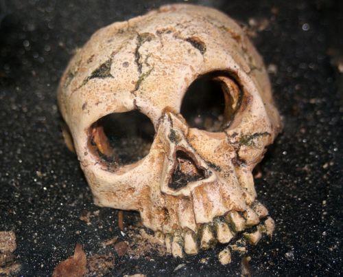 kaukolė,skeletas,žmogus