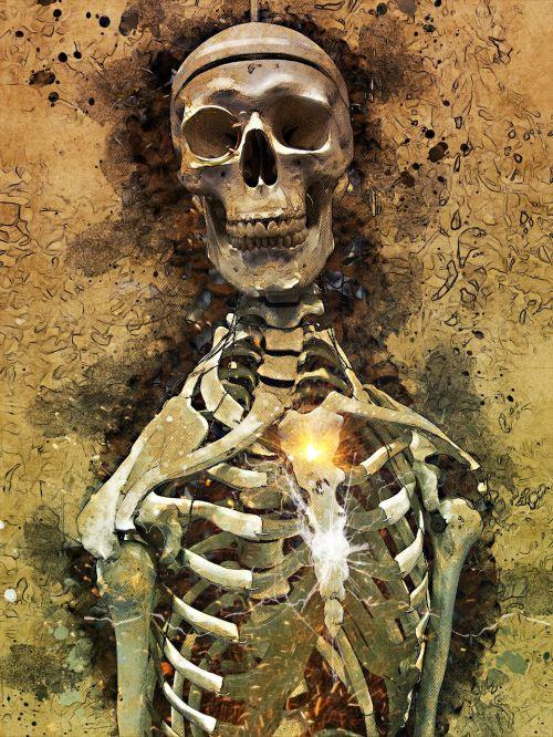 skull bones skeleton