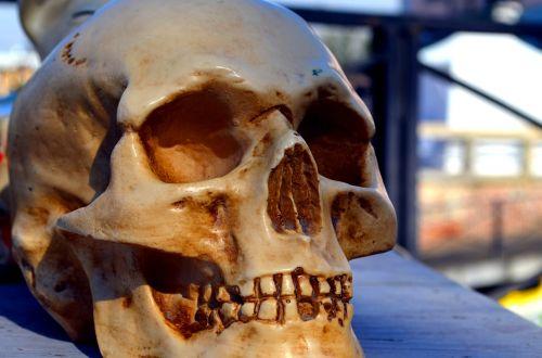 skull antiques