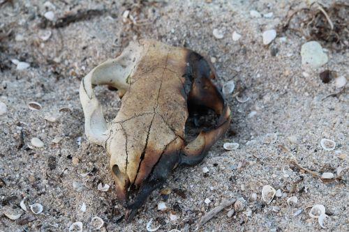 skull dead burnt