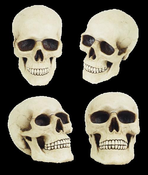 skull anatomy jaw