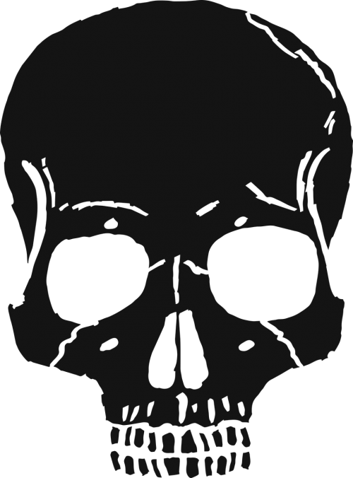 skull bone bones