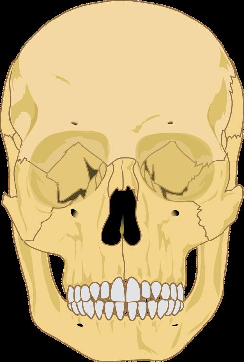 skull human death