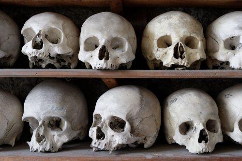 skull frame bone