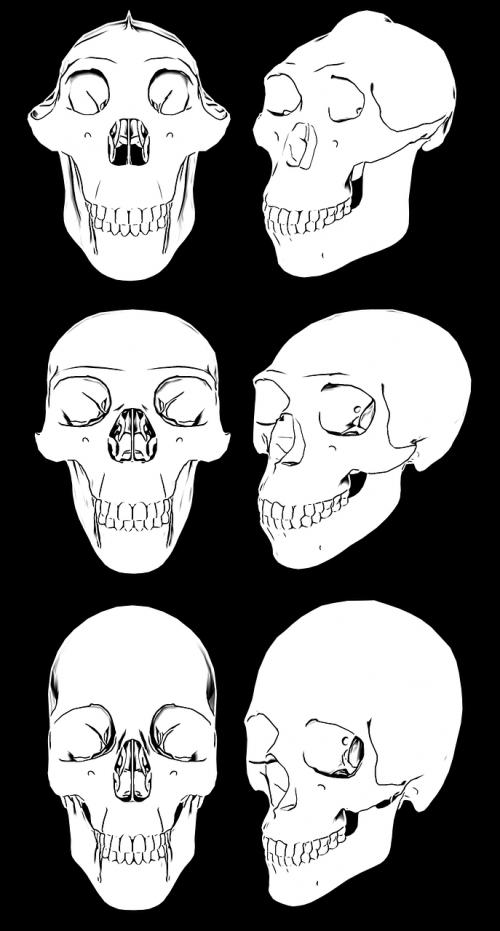 skull skulls skeleton