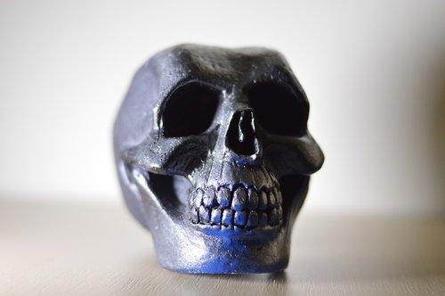skull  cranium  head