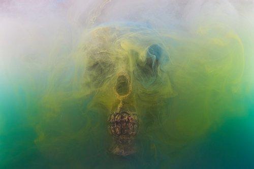 skull  dry head  skeleton