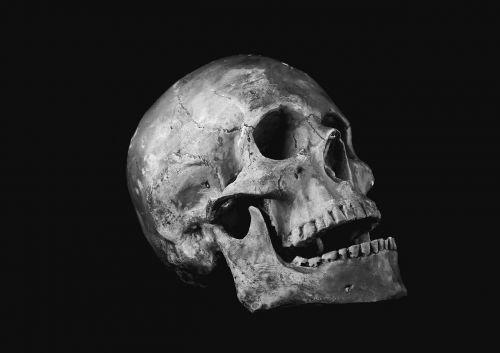 skull helplessness bone
