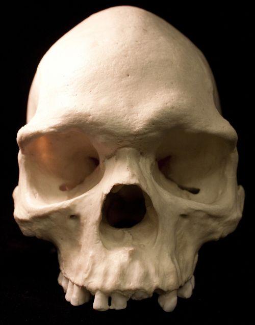 skull skeletons bones