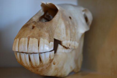 skull death horse
