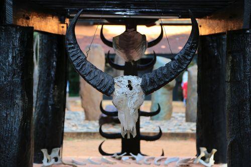 skull buffalo hunt