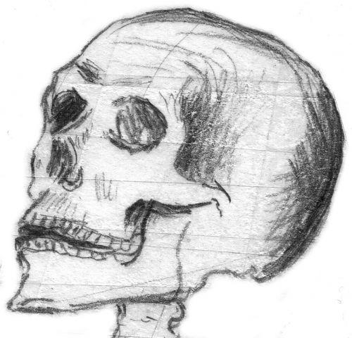 skull halloween skull bone