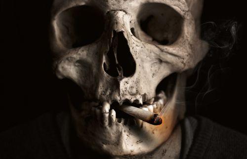 skull and crossbones skull bone