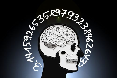 skull and crossbones skull brain