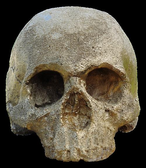 skull and crossbones golden skull skull
