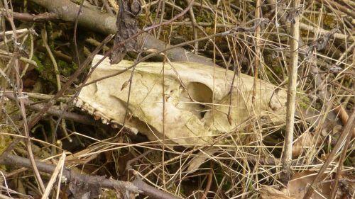 skull bone bone dead