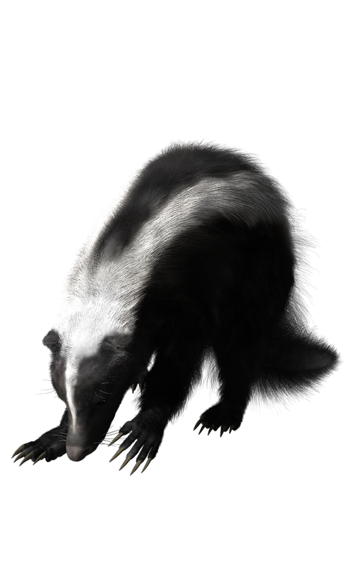skunk  rodent  wildlife
