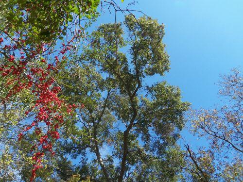 sky fall autumn