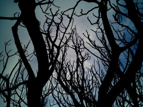 sky trees branches