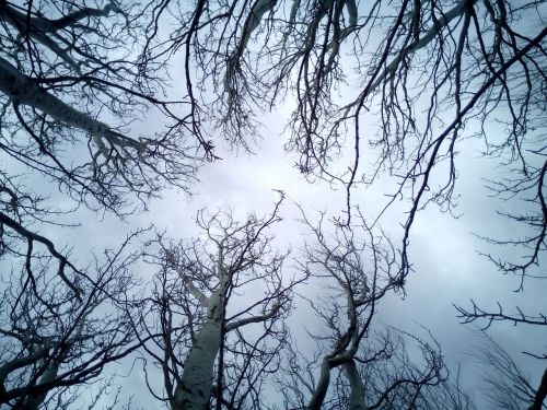 trees sky branches