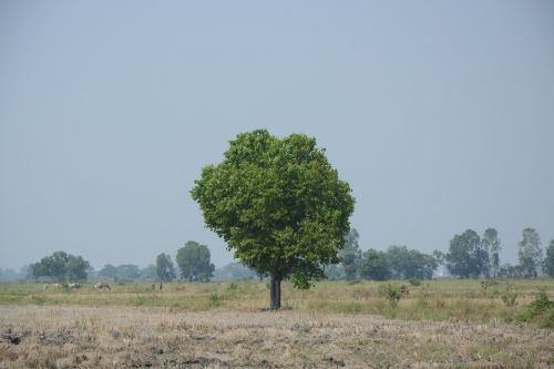 am lonely tree geography