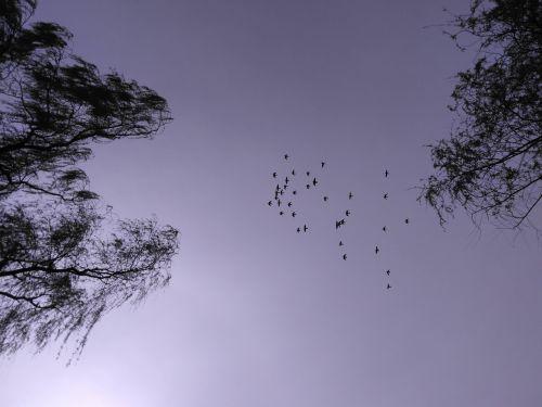 sky birds flight