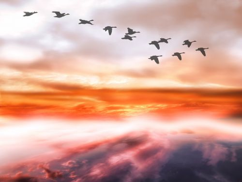 sky clouds geese