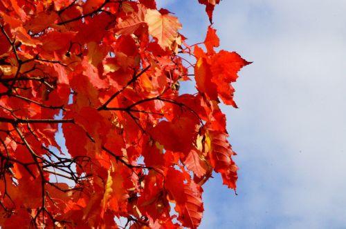 sky autumn leaves