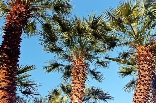sky palma vacation