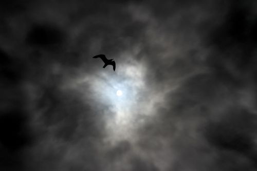 sky,cloud,clouds,calm,tranquility,bird,sun,cloudy,icare,rays