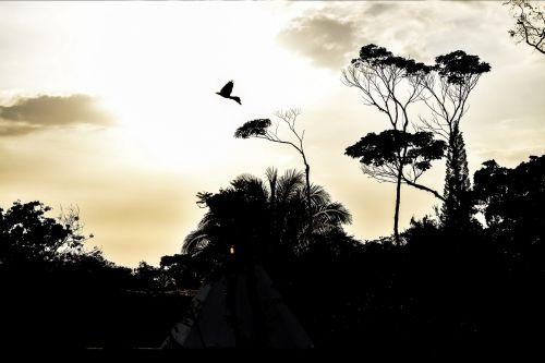 sky,landscape,ave,tree,trees,contrast,guatemala,sunset,sun