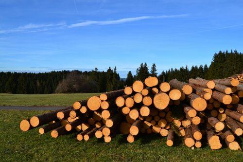 sky wood tree