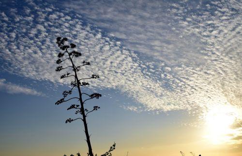 sky sunset abendstimmung
