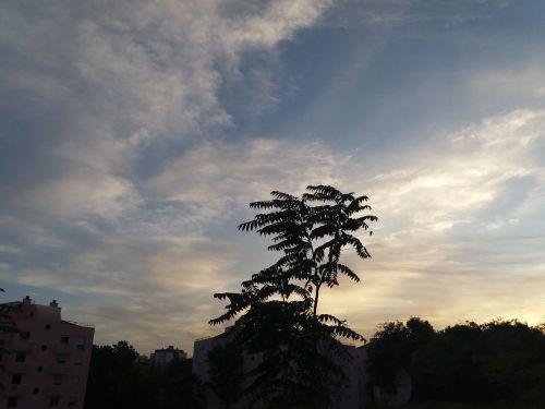 sky twilight tree
