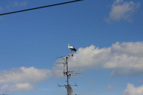 sky bird stork