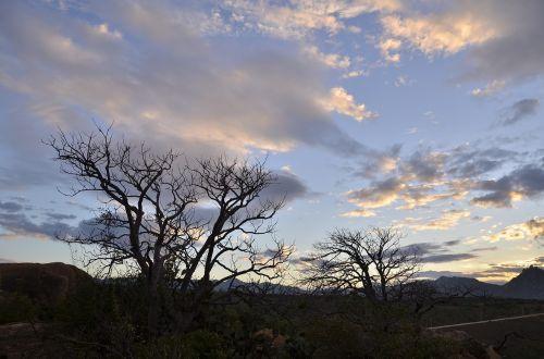 sky sunset tree