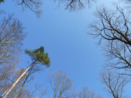 sky trees blue