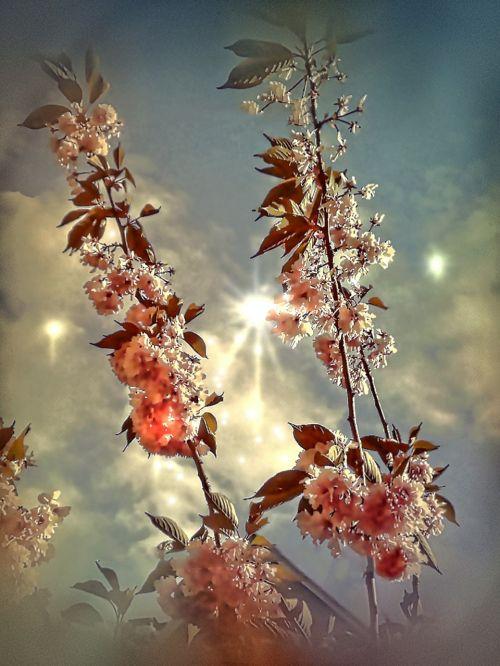 sky wind flower tree