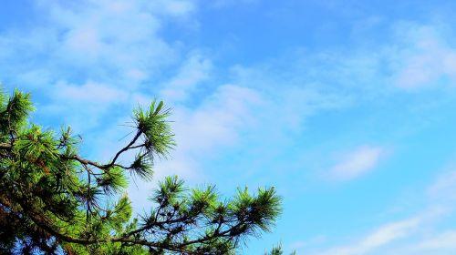 sky pine gyeongpodae