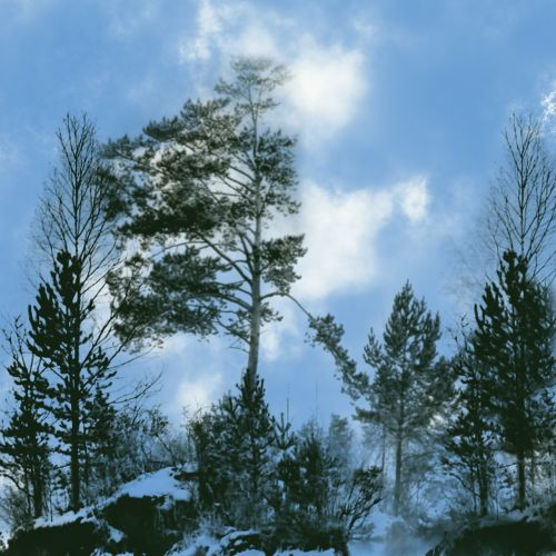 sky trees forest
